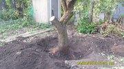 Валка деревьев,  корчевание пней,  уборка. Донецк