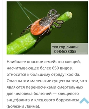 Обработка территории от комаров,  клещей.